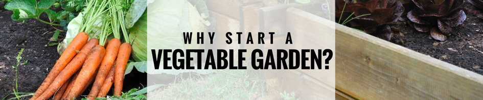 Main image for Benefits Of Starting A Vegetable Garden blog post.